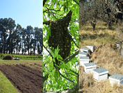 RNA virus circulation among pollinator and non-pollinator species in Argentina